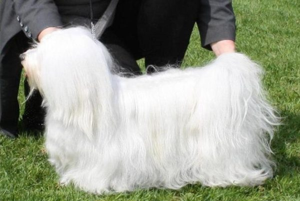 long haired dog grooming
